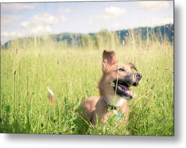 Metal Print featuring the photograph A Dog In The Park by Nicole Young