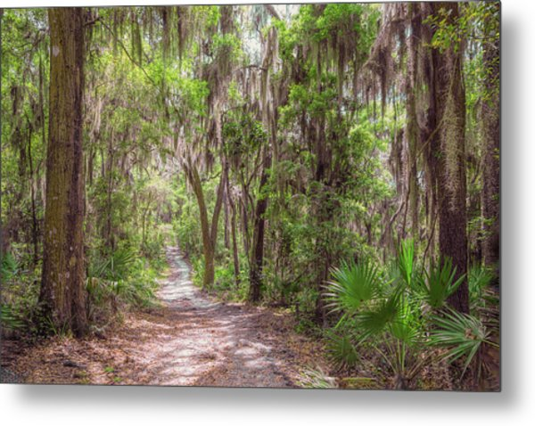 Metal Print featuring the photograph A Forest Trail by John M Bailey