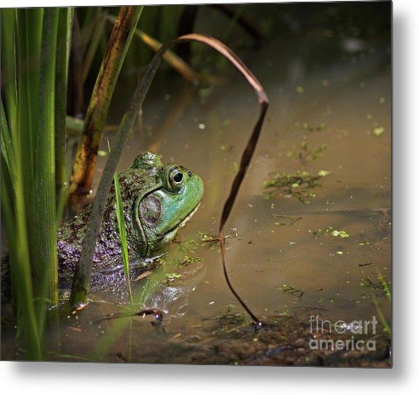 A Frog Waits Metal Print