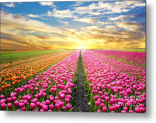 A Magical Landscape With Sunrise Over Metal Print