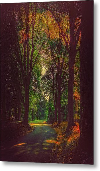 Metal Print featuring the photograph A Moody Pathway by Chris Lord