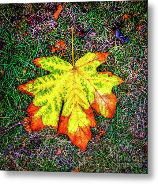 A New Leaf Metal Print