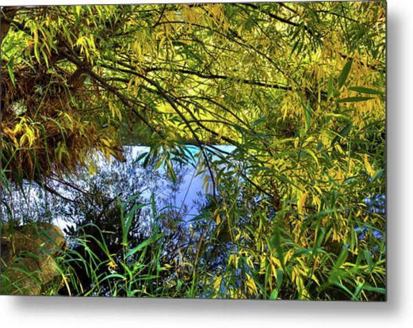 Metal Print featuring the photograph A Peek At The River by David Patterson