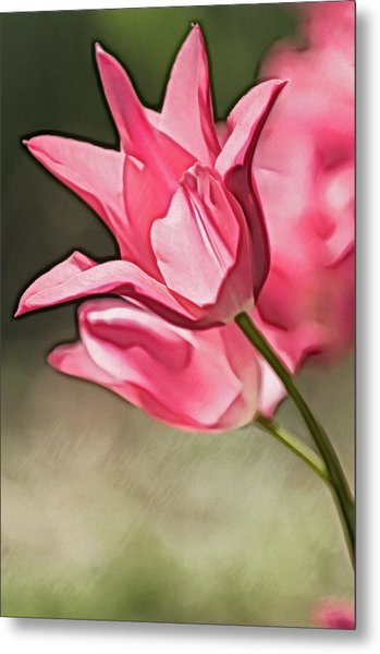 A Pink Tulip Flower Reaching Out Metal Print