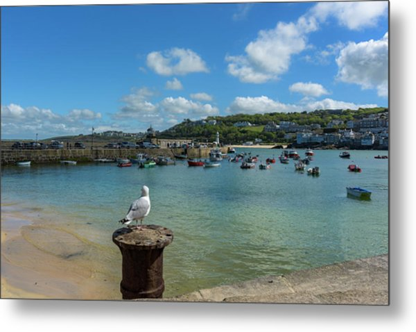 A Seagull Dreaming At The Harbour Metal Print