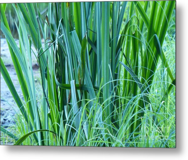 Metal Print featuring the photograph A Shock Of Green by Rosanne Licciardi