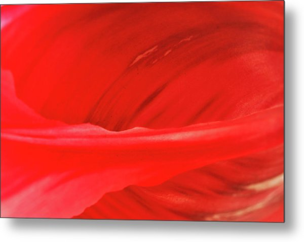 A Single Tulip Petal Metal Print
