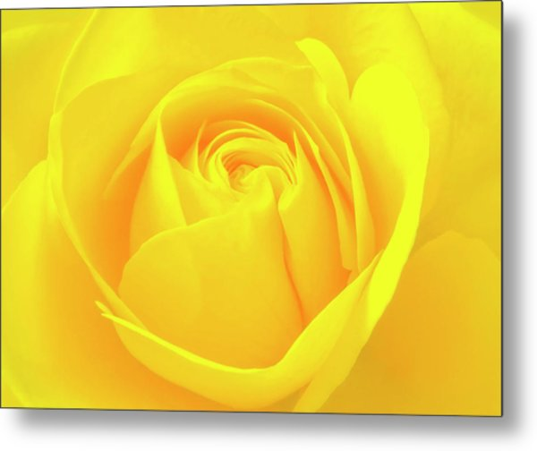 A Yellow Rose For Joy And Happiness Metal Print