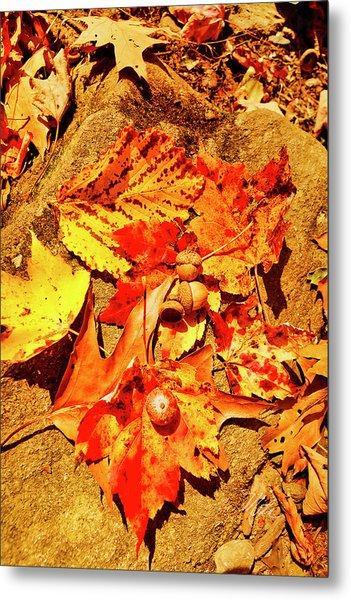 Acorns Fall Maple Oak Leaves Metal Print