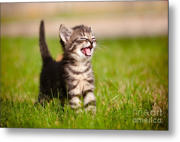 Adorable Meowing Tabby Kitten Outdoors Metal Print