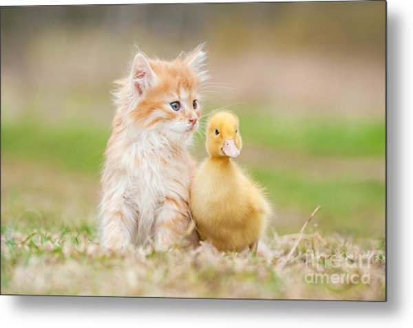 Adorable Red Kitten With Little Duckling Metal Print