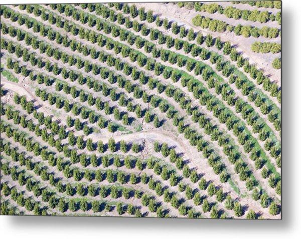 Aerial View Of Orange Grove In Ventura Metal Print