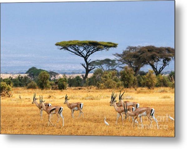 African Landscape With Gazelles Metal Print by Oleg Znamenskiy
