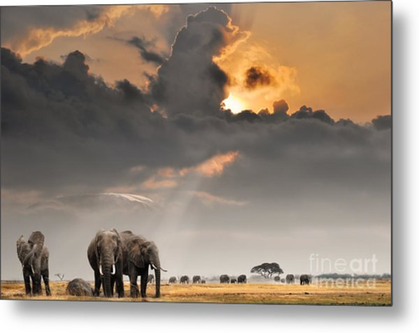 African Sunset With Elephants Metal Print