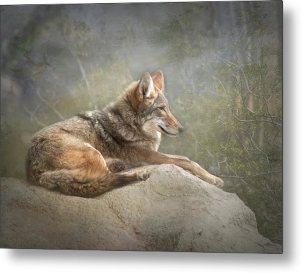 Afternoon Repose Metal Print