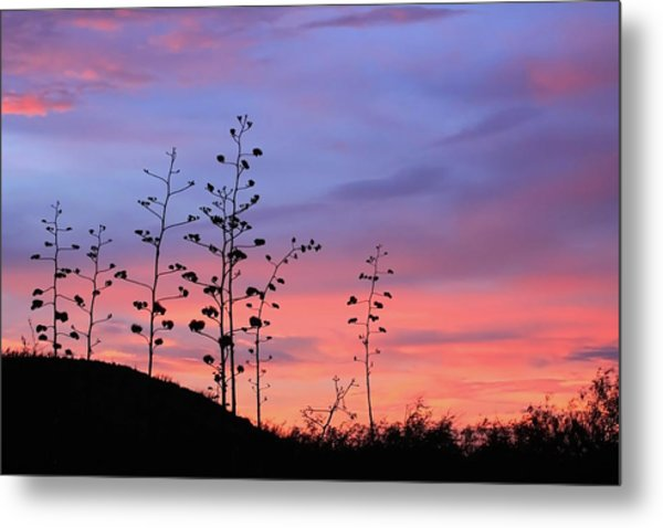 Metal Print featuring the photograph Agave Sunset 1 by Dawn Richards