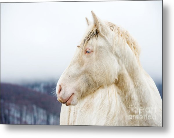 Albino Horse With Eyes Blue On The Snow Metal Print