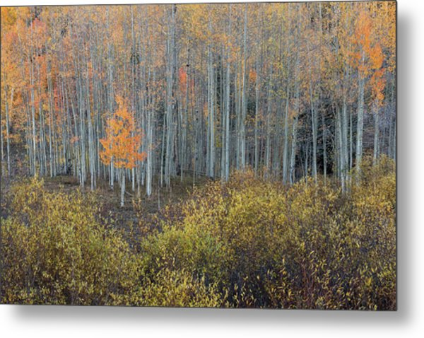 Metal Print featuring the photograph Alone In The Crowd by Angela Moyer