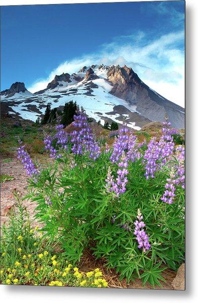 Alpenglow On Flowers And Mt. Hood Metal Print