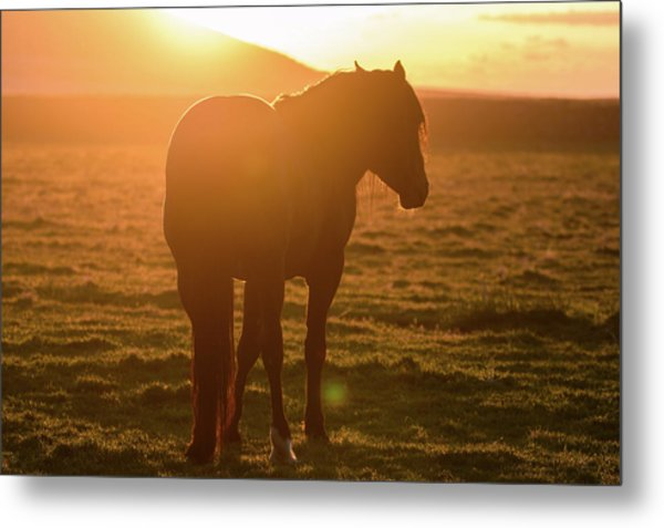 Always Shining Metal Print