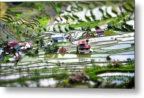 Amazing Tilt Shift Effect View Of Rice Metal Print
