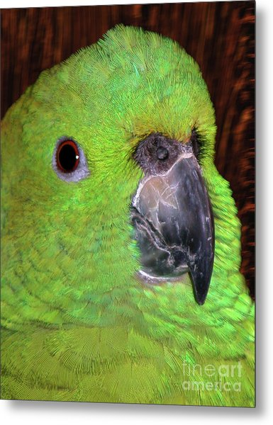 Metal Print featuring the photograph Amazon Parrot by Debbie Stahre