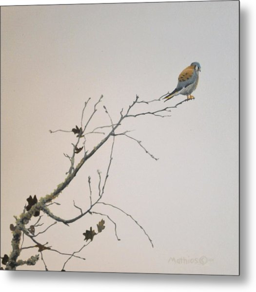 Metal Print featuring the painting American Kestrel by Peter Mathios