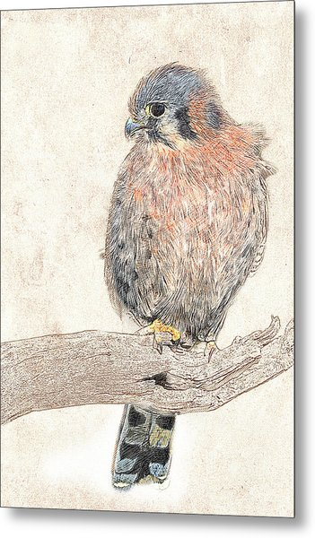 Metal Print featuring the photograph American Kestrel - Photographic Drawing by Dawn Currie