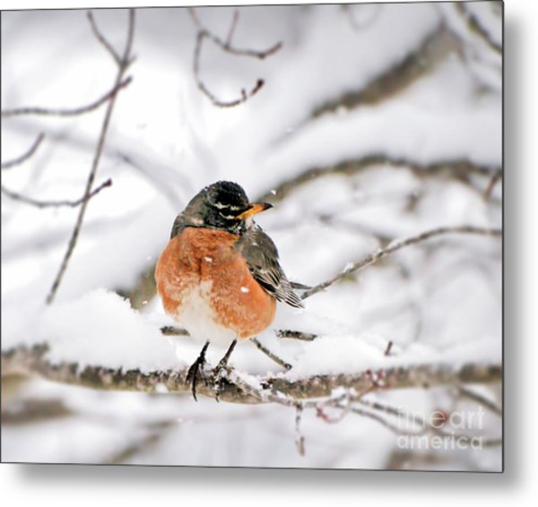 American Robin In The Snow Metal Print