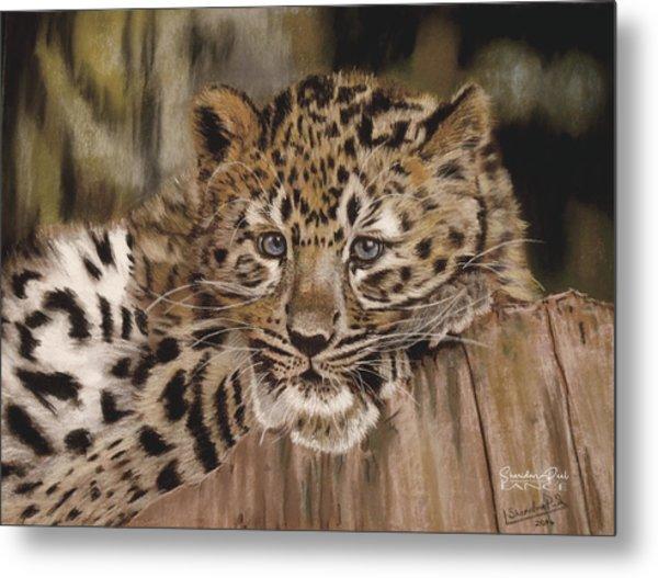 Amur Leopard Cub Metal Print