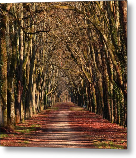 An Avenue Of Trees At The Chateau Of Metal Print
