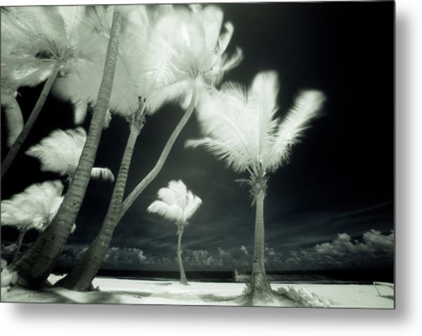An Infrared Image Of Tall Palm Trees Metal Print