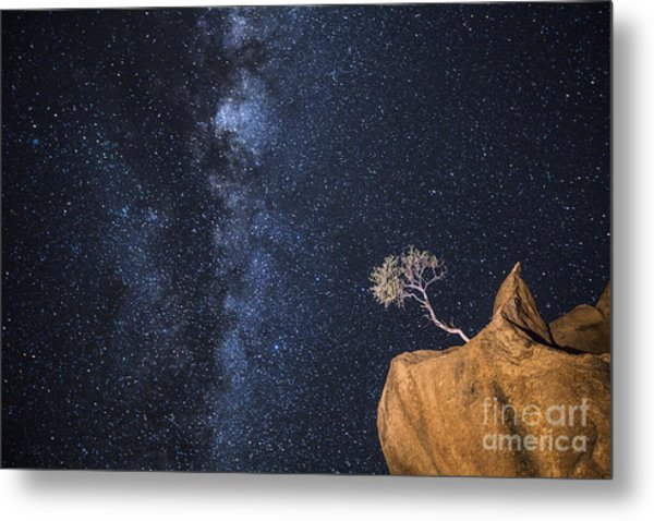 An Tree Grows In An Impossible Position Metal Print