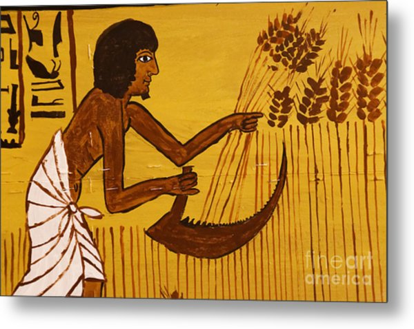 Metal Print featuring the photograph Ancient Egypt Farmer by Sue Harper