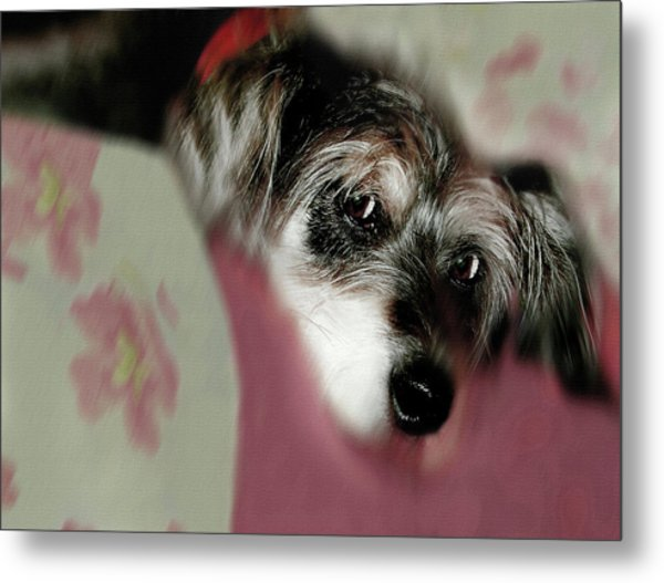 And This Is Sparky Metal Print
