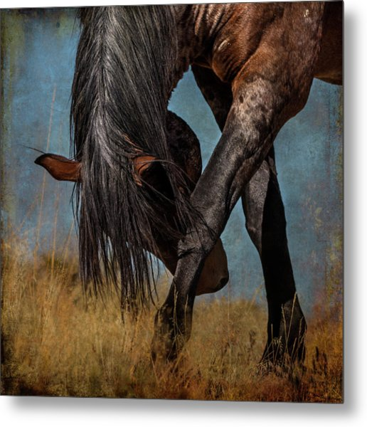 Angles Of The Horse Metal Print