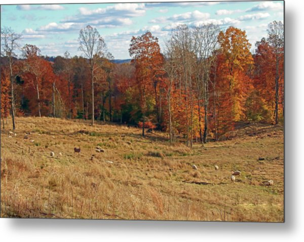 Metal Print featuring the photograph Animals Grazing On A Fall Day by Angela Murdock