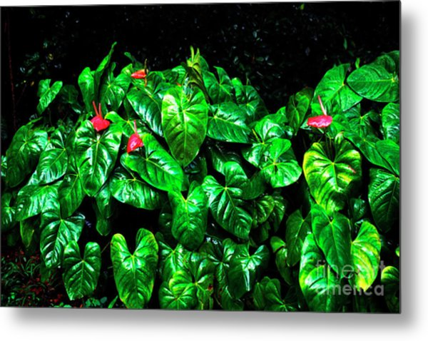 Anthuriums In The Rain Metal Print