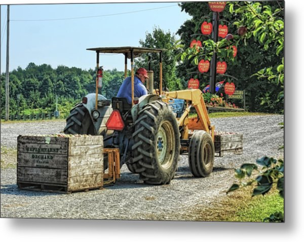 Metal Print featuring the photograph Apple Orchard by Tatiana Travelways