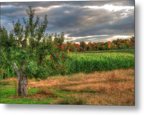 Metal Print featuring the photograph Apple Trees In Autumn - New Hampshire by Joann Vitali