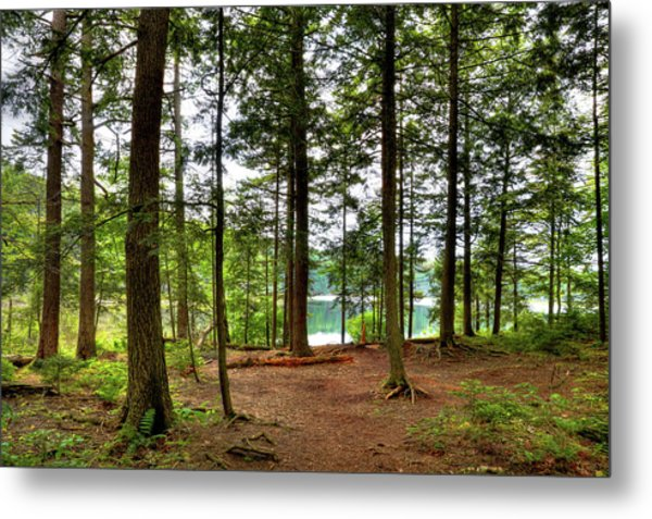 Metal Print featuring the photograph Approaching Sis Lake by David Patterson