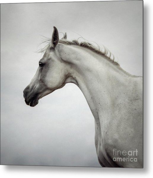 Metal Print featuring the photograph Arabian Horse Portrait by Dimitar Hristov