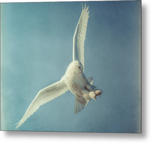 Arctic Angel Metal Print