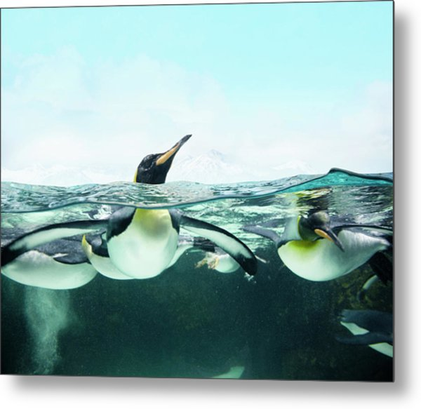 Arctic Penguins Metal Print by Colin Anderson