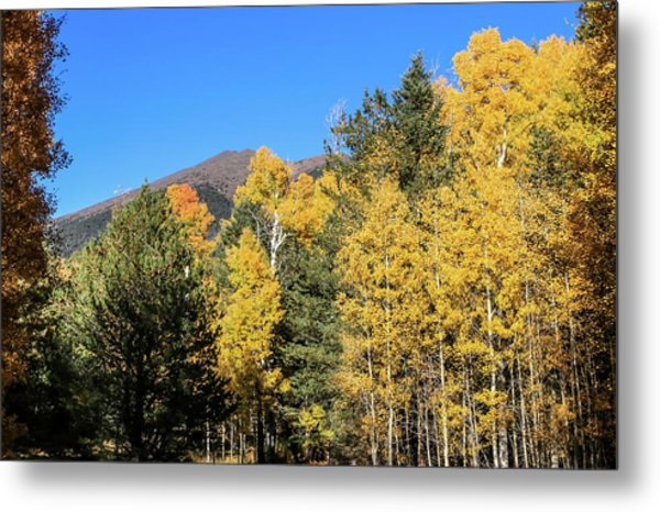 Arizona Aspens With Mountains Metal Print