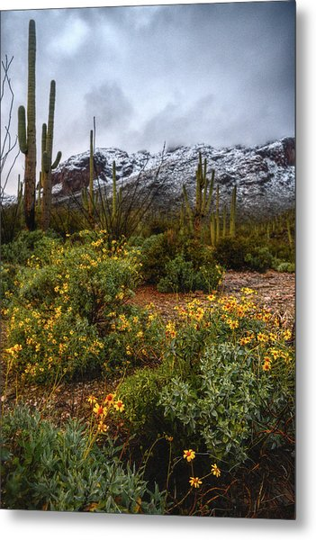 Metal Print featuring the photograph Arizona Flowers And Snow by Chance Kafka