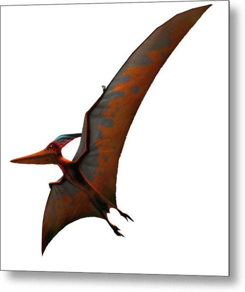 Artwork Of Pteranodon Sternbergi Metal Print by Mark Garlick