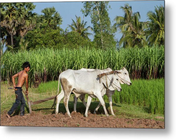 Asian Young Farmer Working The Field Metal Print