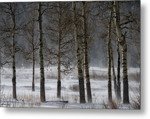 Metal Print featuring the photograph Aspen Chill by Darlene Bushue