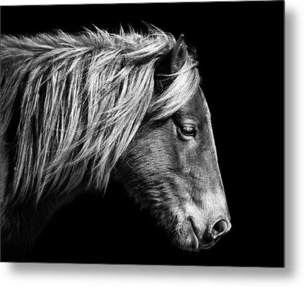 Metal Print featuring the photograph Assateague Pony Sarah's Sweet Tea B And W by Bill Swartwout Fine Art Photography